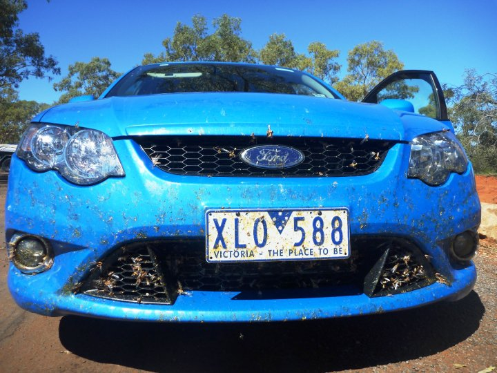 Michelle's road trip - The locust plagues started and stayed from Cobar to Broken Hill