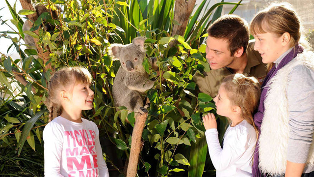 Breakfast-with-the-Koalas-at-WILD-LIFE-Sydney-Zoo