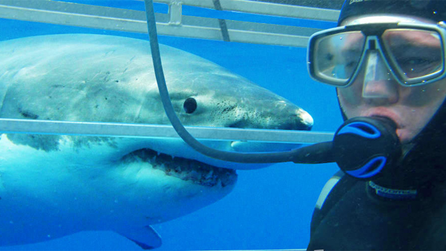 Cage-Dive-with-Great-White-Sharks-at-Port-Lincoln