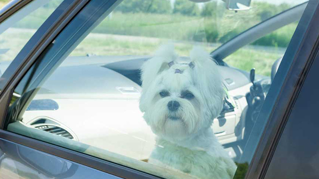 What to do if you see a pet locked inside a hot car | Road