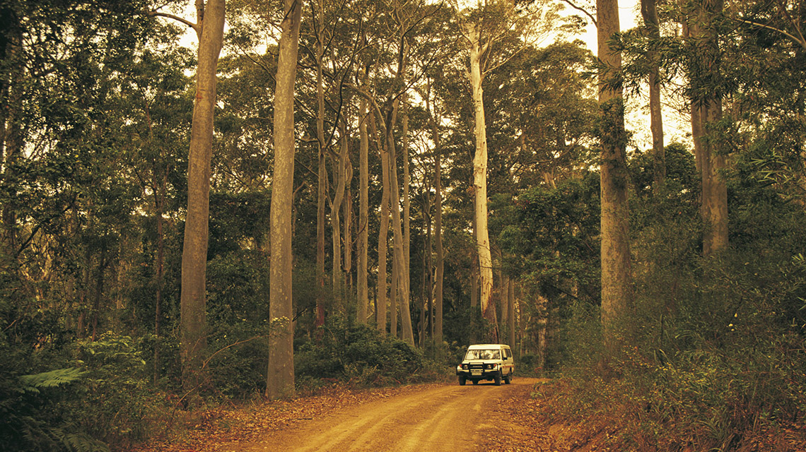 Forest South Durras my nrma local guides