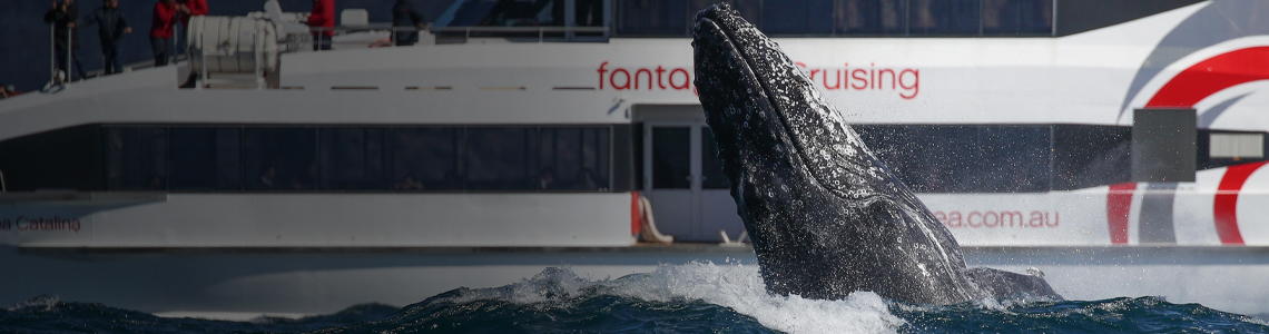 whale watching, whale watching sydney, whale watching season, whale watching cruises from sydney