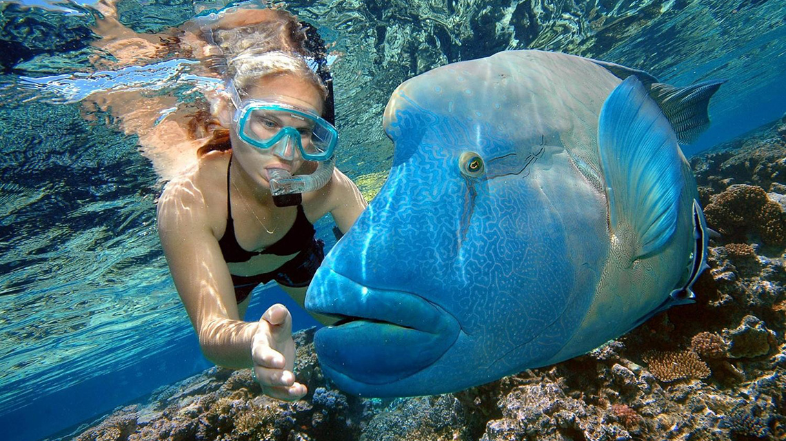 Palm Cove Holiday Park Snorkeling NRMA Blue Member Discount