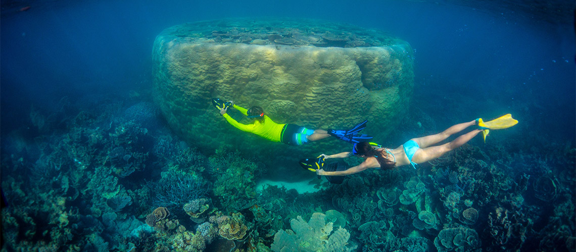 Ningaloo Snorkelling  Ningaloo Holiday Park NRMA Parks and Resorts WA