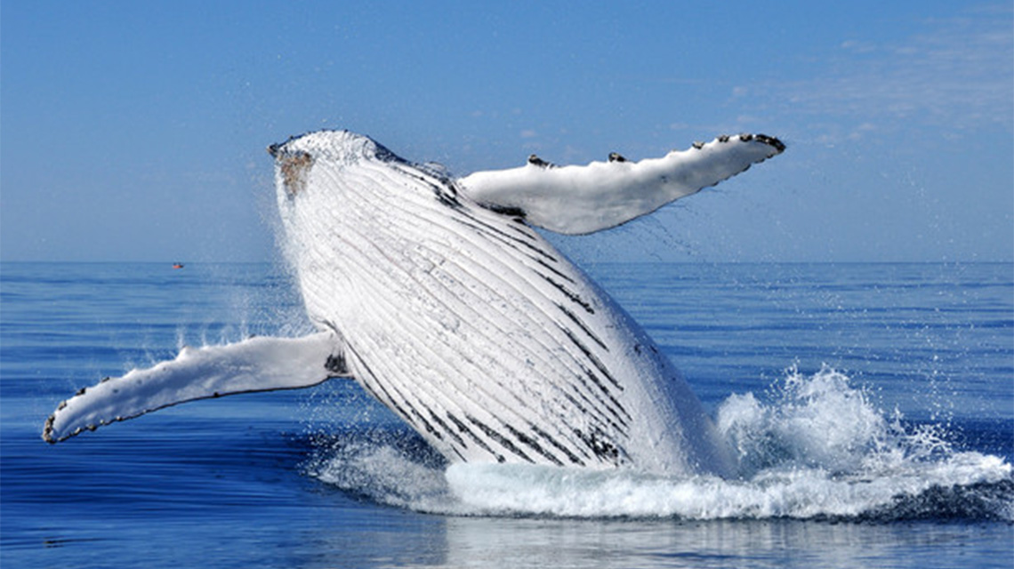 Whale Watching Busselton Holiday Park NRMA Holiday Parks and Resorts WA