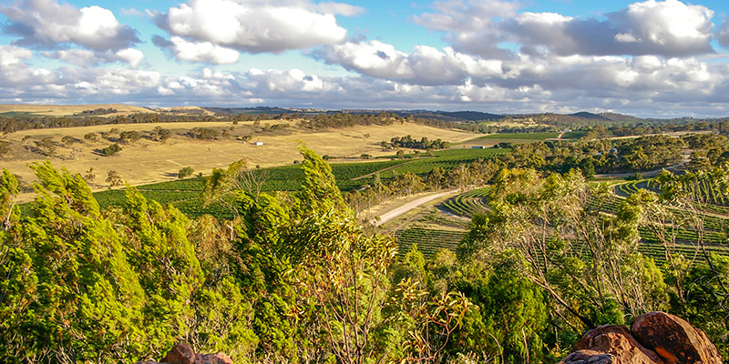 Clare Valley Adelaide Wineries my nrma road trips