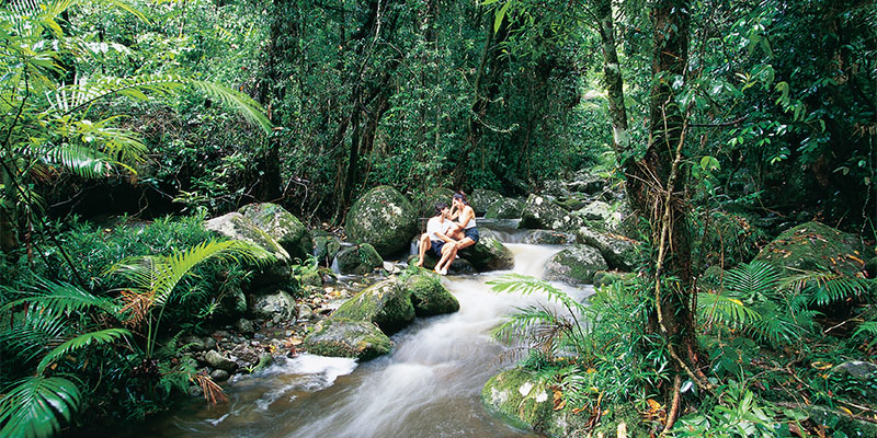Mossman Gorge Cairns to Cape York my nrma road trips