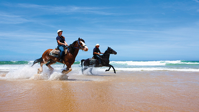 Horse Riding Port Stephens Sydney to Port Stephens my nrma road trips