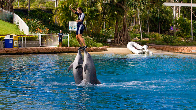 Sea World Dolphin Show Queensland