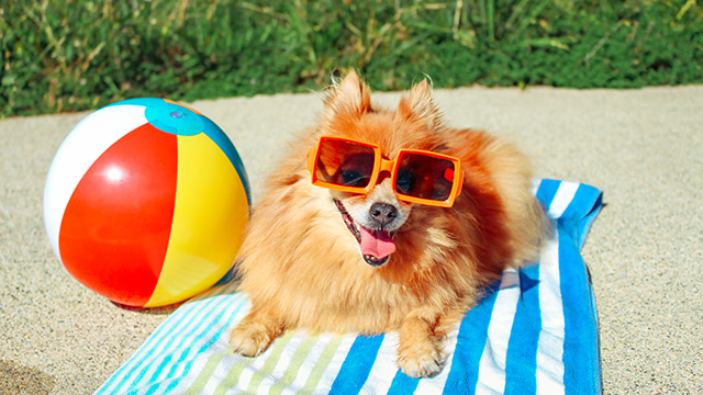 NRMA Pet Friendly Holiday Parks